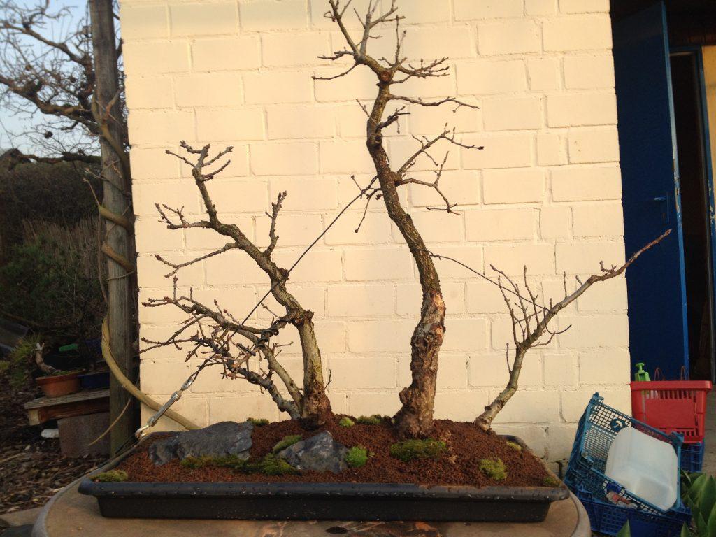 Eichenwald (Quercus Robur)